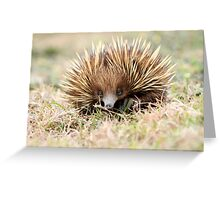 Spike2 Greeting Card
