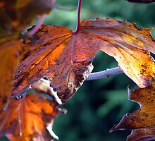 Autumn Leaves by Angus Russell