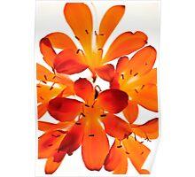 Oranje Glow. Poster