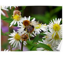 Nectar Gatherer Poster