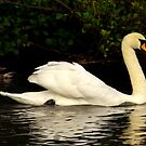 Swaning Around #2 by Trevor Kersley