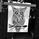 Owlles  by Meretekc