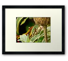 Only Eyes for You Framed Print