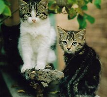 Family Portrait of Cats 2 by Richard  Willett