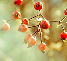 Red Berries by Courtney Jean McCoy
