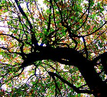 Spider Branches of a Tree, Silhouette :) by Honor Kyne
