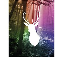 Forest Stag Colour Print Photographic Print