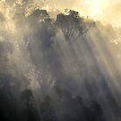 Yarra Glen forest, Yarra Valley. by Ern Mainka