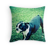 Boston Terrier Playing with Ball Throw Pillow