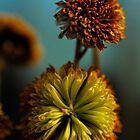 Forgotten Flowers by AraujoW