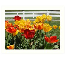Tulip Patch Art Print