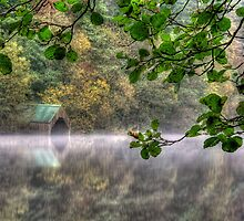 Through the trees by Linda  Morrison