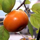 persimmon by Sheila McCrea