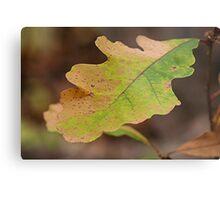 Multi Colored Oak Leaf Metal Print