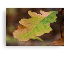 Multi Colored Oak Leaf Canvas Print