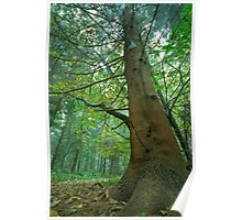 The magic faraway tree Poster