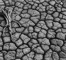 Drought by Ian English