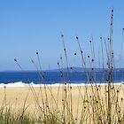 Grasses at Tura Beach by Melva Vivian