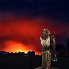 Raptor's sky fire rhapsody... by Normcar