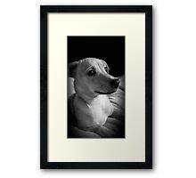 Precious Puppy Framed Print