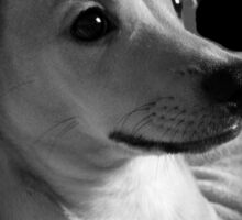Precious Puppy Sticker
