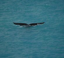 whale tail by elphonline