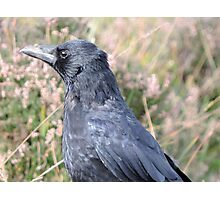 Bore Black Feathers Photographic Print