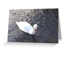 Mirror, mirror.... who is the fairest swan of all? Greeting Card