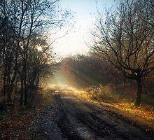 Winter Path by Nigel Bangert