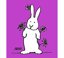 Daisy - Bunny Photographic Print