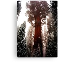 """General Sherman"" Sequoia National Park California Canvas Print"