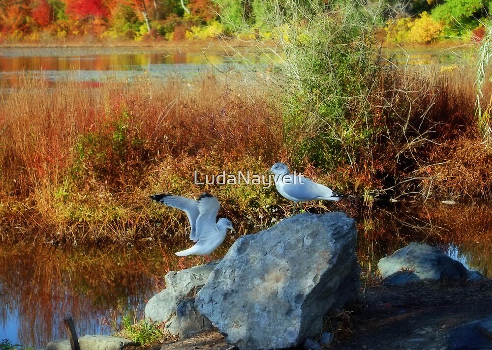 Indian Summer or warm fall days in New England by LudaNayvelt