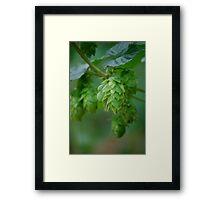 Hops III Framed Print