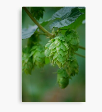 Hops III Canvas Print