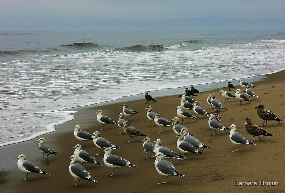 Gulls on Morning Watch. by Barbara  Brown