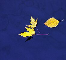 Floating Leaves by DiEtte Henderson