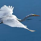 Great White Egret by George I. Davidson