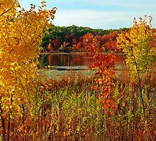 Chestnut Hill's colors by LudaNayvelt