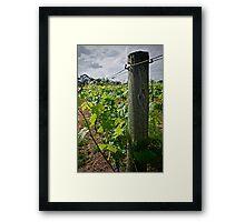 Patrick Plains - Hunter Valley Framed Print
