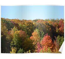 Foliage! Poster