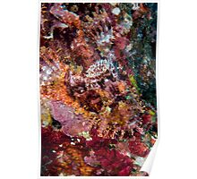 Blended Scorpionfish Poster
