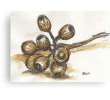 Scribbly Gumnuts Canvas Print