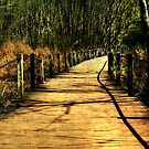 The Path Less Taken by Scott Mitchell