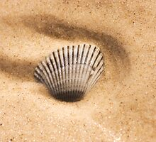 Seaside Seashell by Ryan Jorgensen