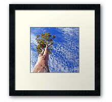 outback tree against sky Framed Print