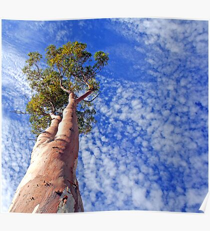 outback tree against sky Poster