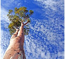 outback tree against sky Photographic Print