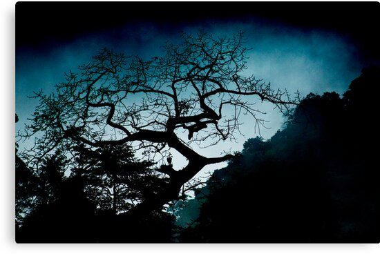 Jungle Silhouette by Tony Lin