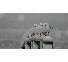 Winter chill Photographic Print