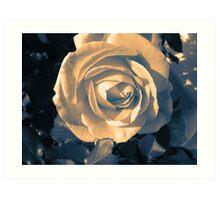 Peaceful Rose Art Print